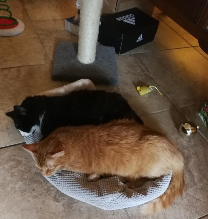 yatcats